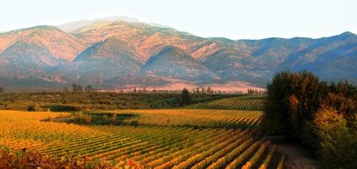 Chilean Vineyards