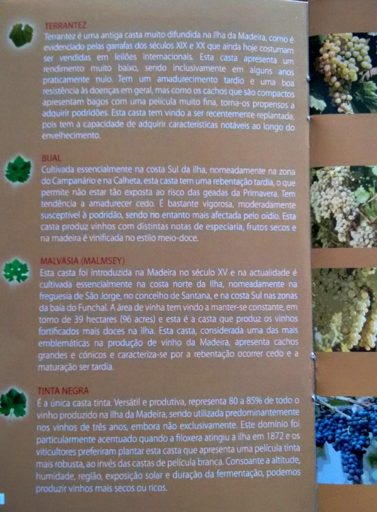 Madeira Castas 2